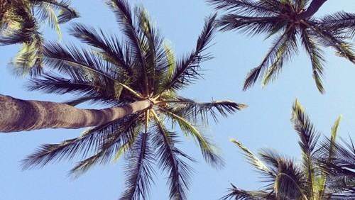 palmier tumblr