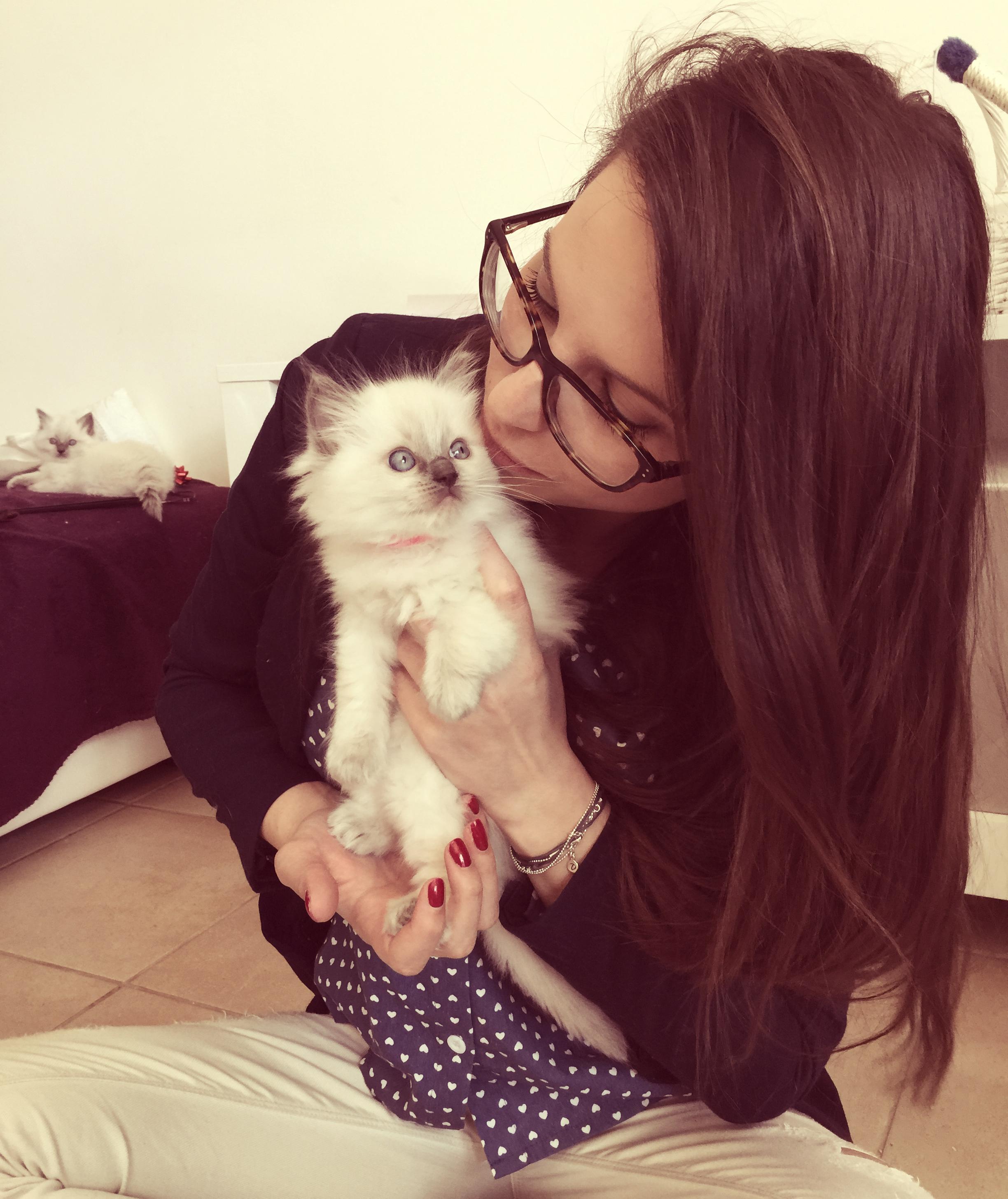 Comment accueillir un chaton la maison for Arrivee chaton a la maison